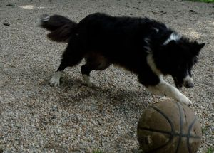 Maggie playing soccer.JPG